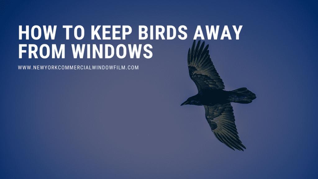 keep birds away from windows new york city