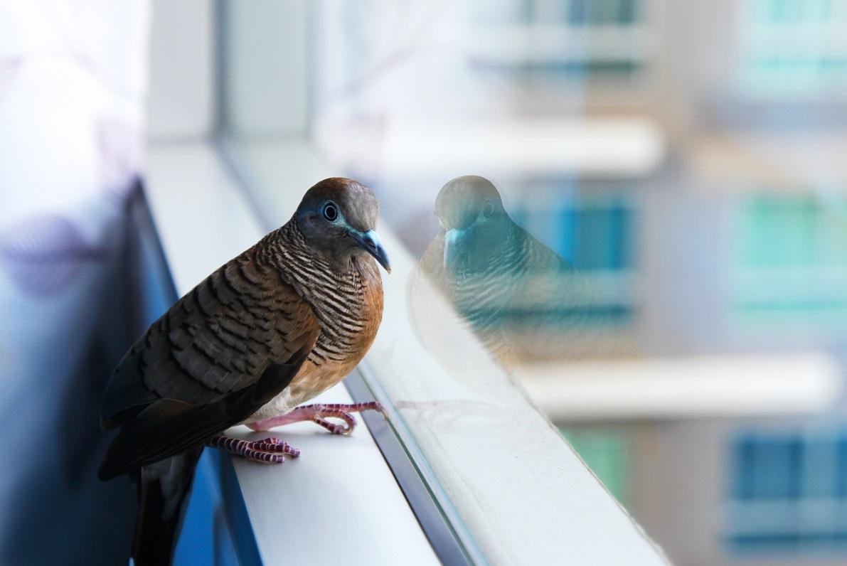 bird strike prevention film new york